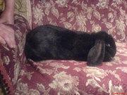 Элитные кролики Днепропетровска