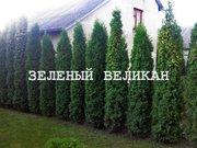 Вечнозеленые живие изгороди от 1, 5 м до 9 м