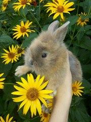 Декоративный кролик, девочка!
