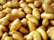 Купим картофель 6+ оптом