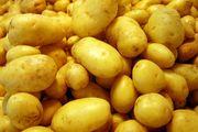 Закупаем посадочный картофель от 10т в любом регионе