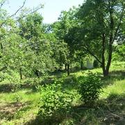 Продам дачу в Самаровке,  2 км от Днепропетровска