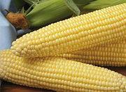 Кукуруза сахарная оптом початки
