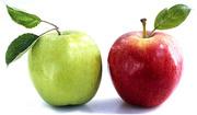 продам яблоки урожай 2016г.