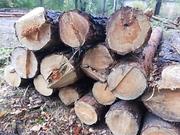 Продам дрова в Днепре и области.