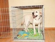 Продаю собачью клетку,  переноску,  вольер для собак