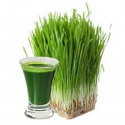 Витграсс (wheatgrass) cок из ростков пшеницы