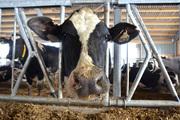 Молоко оптом от фермерского хозяйства
